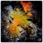 foto keindahan bawah laut (2)