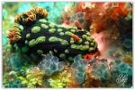 foto keindahan bawah laut (4)