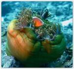 foto keindahan bawah laut (6)