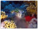 foto keindahan bawah laut (8)