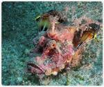 foto keindahan bawah laut (9)