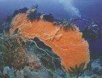 keindahan laut raja ampat (1)