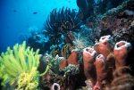 keindahan laut raja ampat (3)