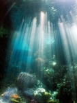 keindahan laut raja ampat (8)