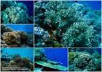 pulau hoga (3)