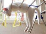 kucing lucu (1)
