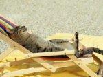kucing lucu (3)