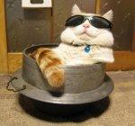 kucing lucu (7)