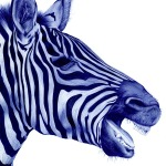 Stunning Animal Portraits Drawn with a Bic Pen (1)