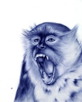 Stunning Animal Portraits Drawn with a Bic Pen (2)