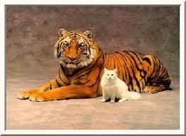 """Mau-mau kucing vs Mau-mau harimau"""